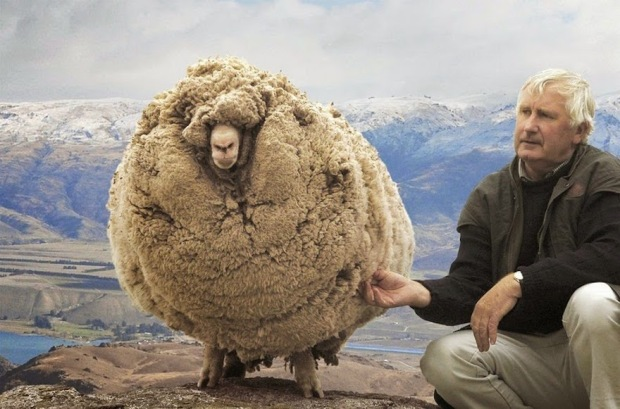 shrek-the-sheep-